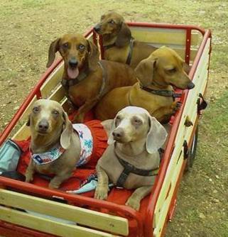 2013 besides Toys And Collectables as well Los Coches Mas Frikis Del Mundo likewise Germans Steal Oscar Mayer Wienermobile together with Dog. on oscar mayer dog wagon