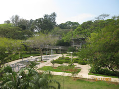 Marine Terrace Garden