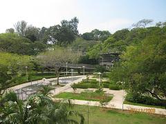 Marine Terrace Garden