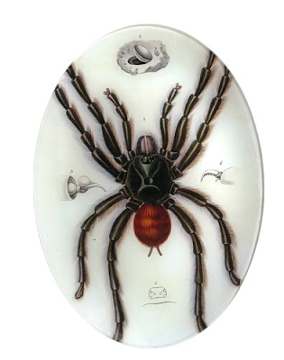 itsy bitsy araña