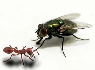 semut-dan-lalat.jpg (500×370)