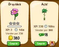 Orquídea e açaí na mini fazenda