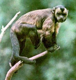animales extintos y en peligro de extincion -presta atencion