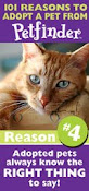 ****Click here**** to see our adoptable pets