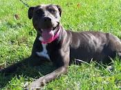 CiCi aka Shanana adopted 11/14/09