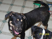 Biggie adopted 12/23/09