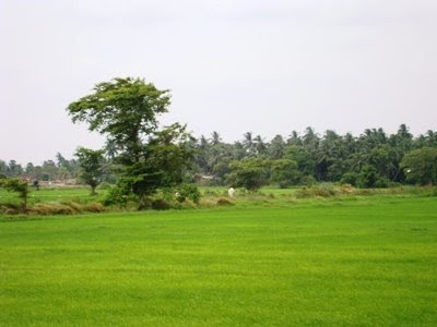தம்பலகாமம்