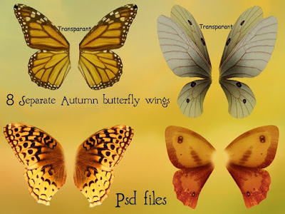 Autumn butterfly wings