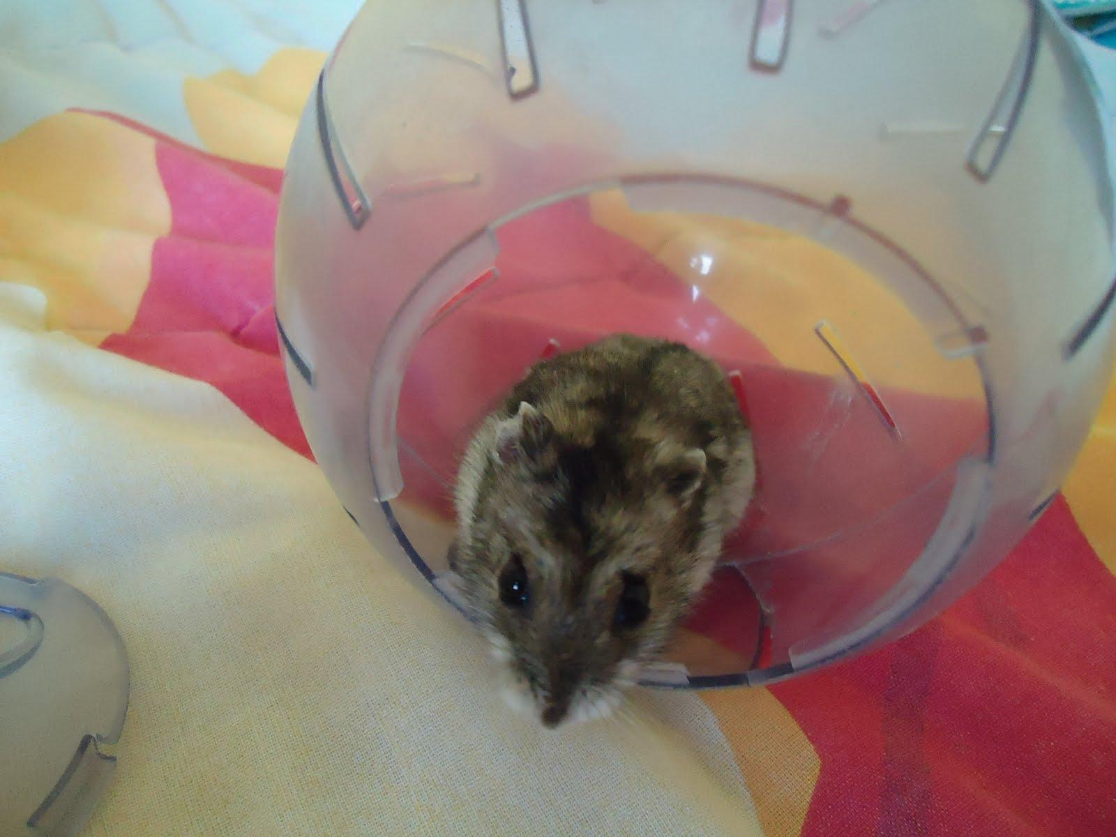 hamster ball bola acrilico para hamsters suporte