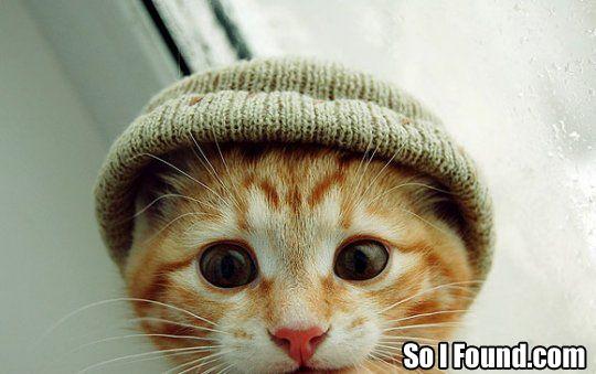 cat in hat images. Cat In Hat Cupcakes.