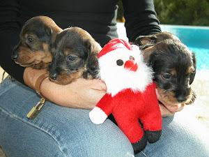 En attendant Noël !!!
