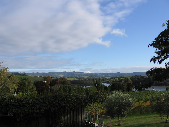 Matakana Vinyard View (The Saltings)