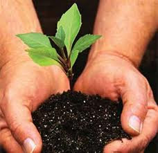 Upaya menjaga keseimbangan lingkungan