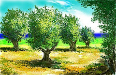 Olive  trees