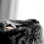 Como gatos.. .