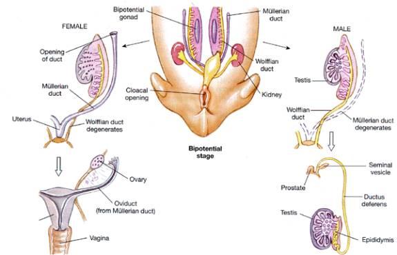 comer vagina femenino de varón