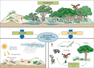 Historia y geografia tipos de ecosistemas for Lagunas artificiales construccion