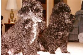 Suzy and Jasper