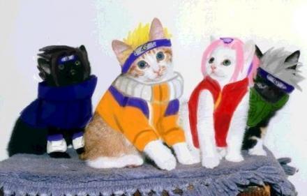 Animales cosplayando Gatos-ninja-naruto