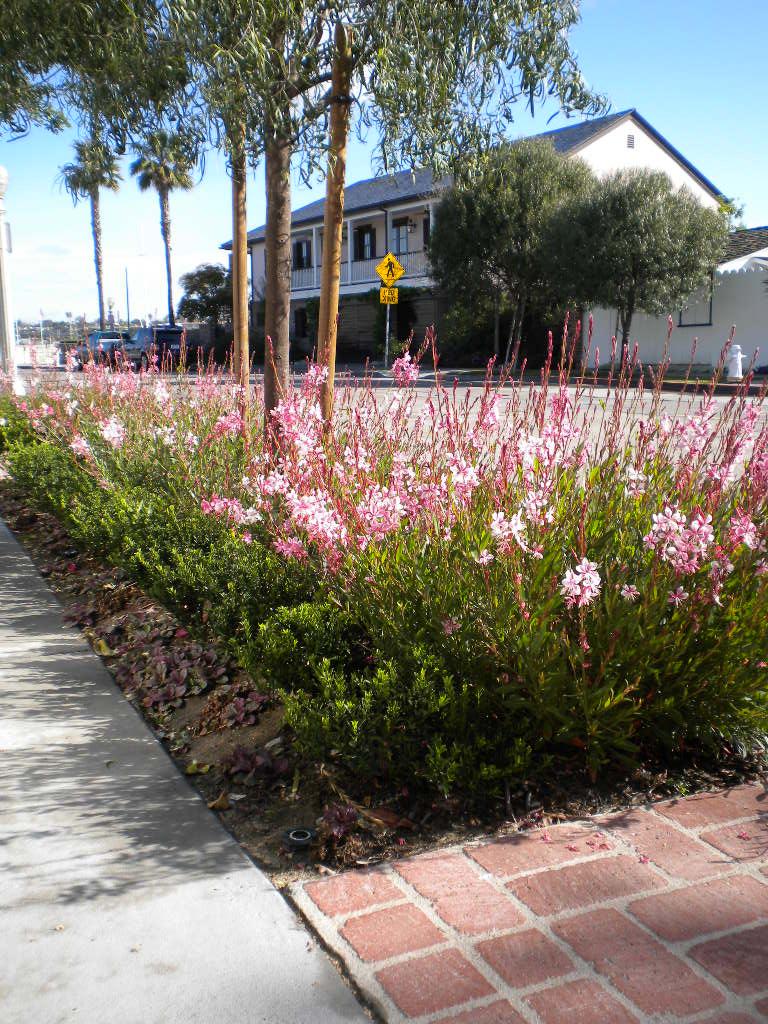 kmb design newport beach sidewalk garden in bloom. Black Bedroom Furniture Sets. Home Design Ideas