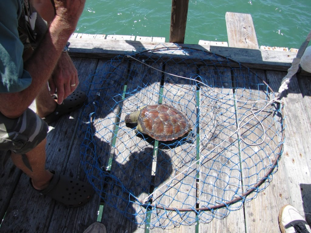 Birder 39 s eye view fishing trip and wildlife rescue for Pier fishing net