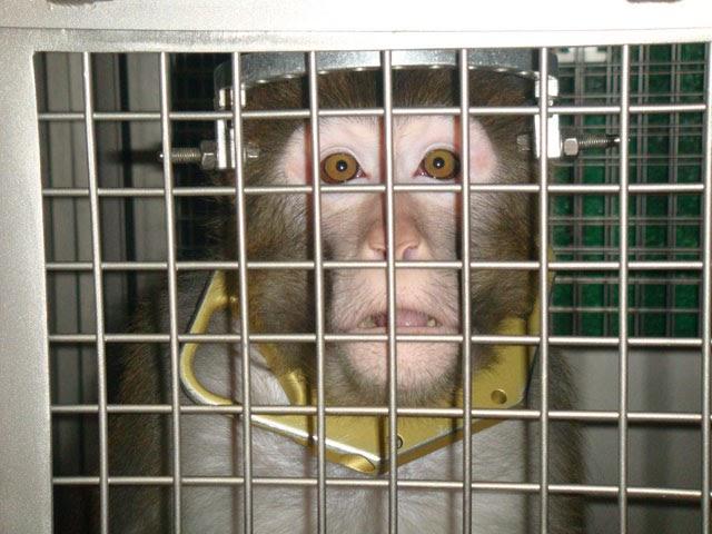 ... samen met Groen! - Partij dient wetsvoorstel in voor verbod op alle: thuybloganimal.blogspot.com/2009/11/anti-dierproeven-coalitie-werkt...