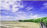 ป่าชายเลน ชลบุรี