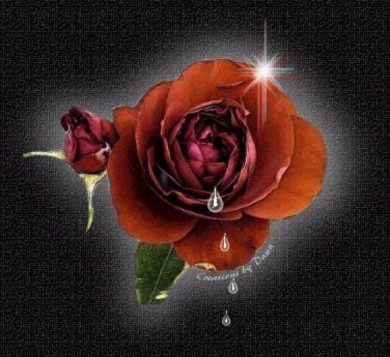 Suno dil se dil se for Do black roses really exist
