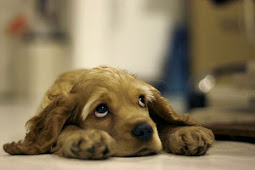 Quando si sceglie di vivere con un cane... è PER SEMPRE !!!