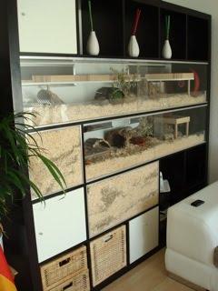 naturnahe hamstergehege ikea expedit f r yoyo und sony. Black Bedroom Furniture Sets. Home Design Ideas