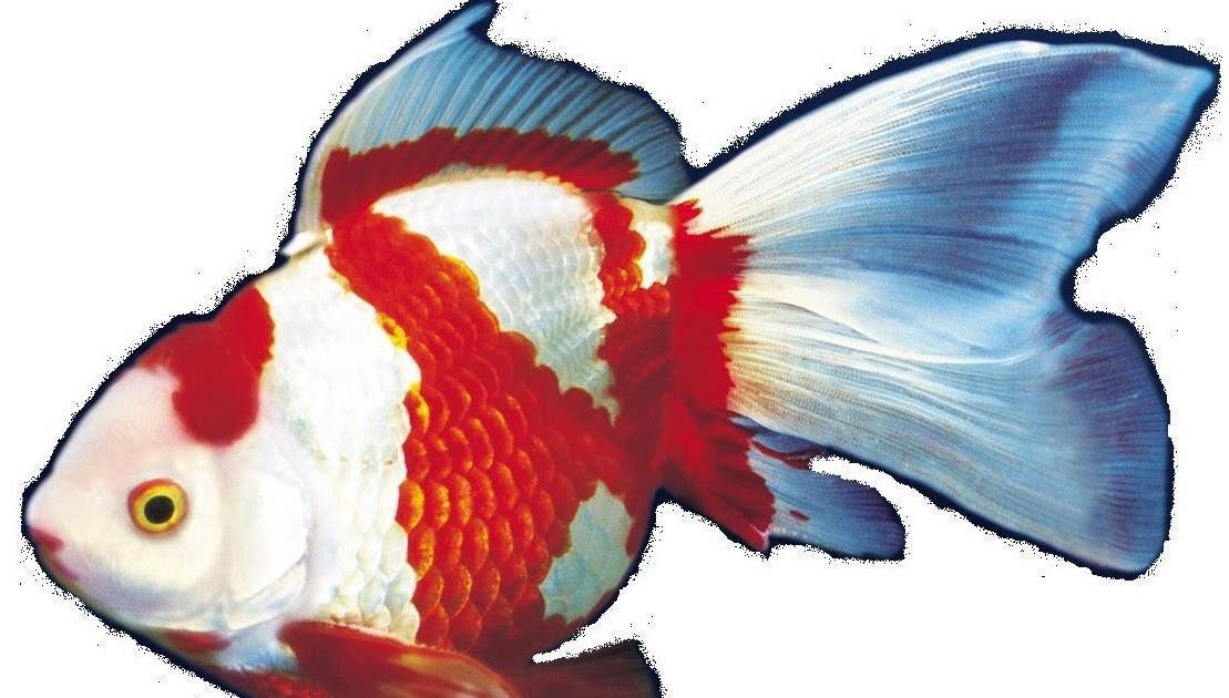 Reproducion y venta de peces articulos para acuarios y for Granja de peces ornamentales