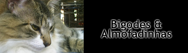 Bigodes e Almofadinhas
