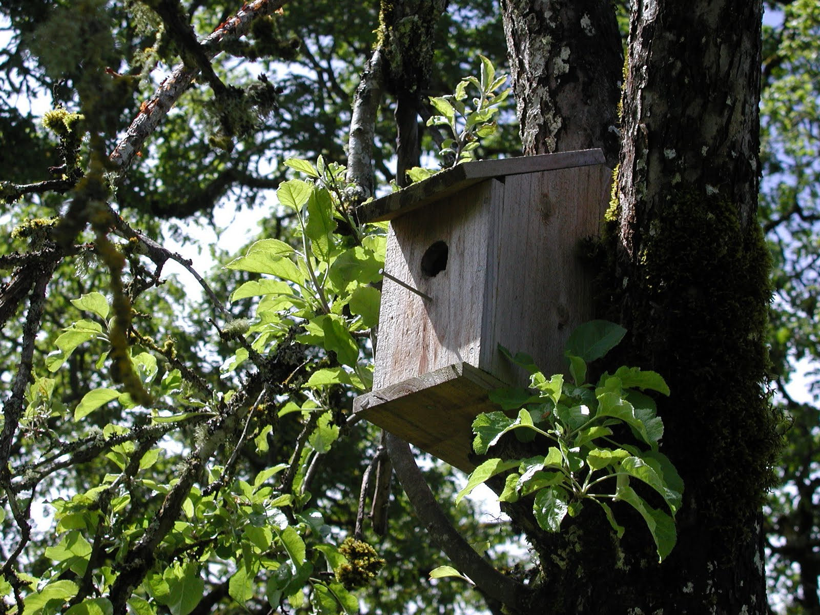 nesting behaviors and ectoparasite interactions of tree swallows Mainwaring et al-2014-ecology and evolution - download as pdf file (pdf), text file (txt) or read online paper.