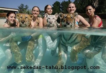http://1.bp.blogspot.com/_uvGh2J6euuA/THPac584kxI/AAAAAAAAADo/1xqHCM4PGVc/s1600/macan+1.JPG