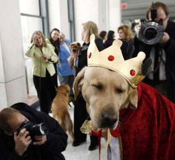 Cane che ha vinto ma odia i fotografi