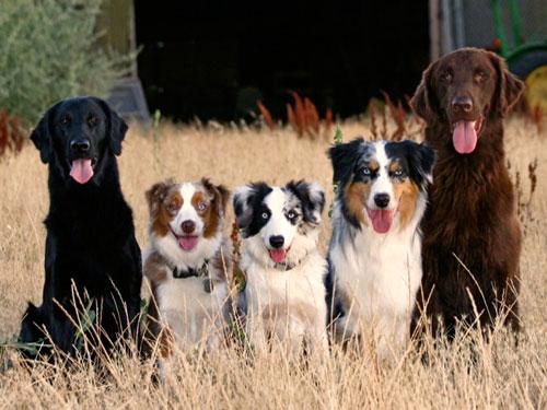Le studiate pose dei cani