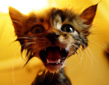 Gatto che si sveglia da un incubo
