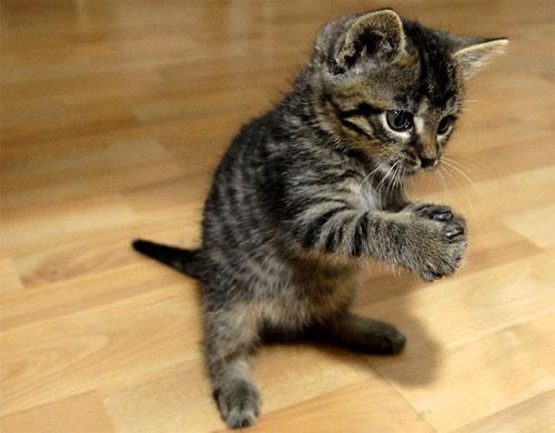 Gatto che forse ha acchiappato una mosca