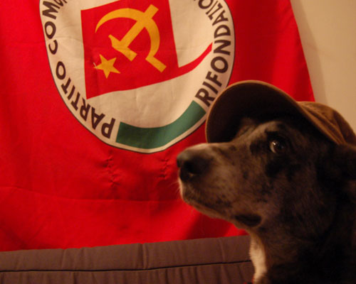 Cane cui non hanno ancora dato la notizia