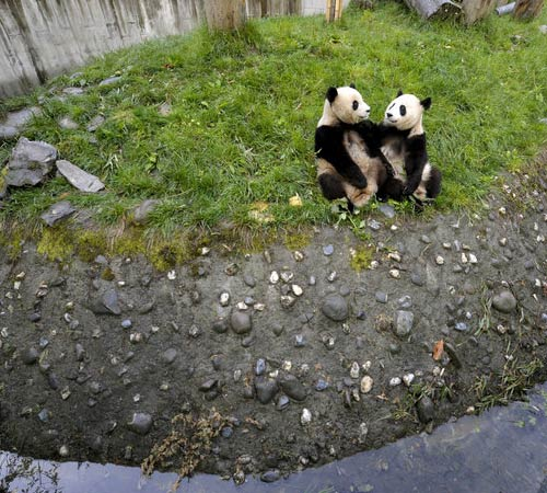 Panda amici