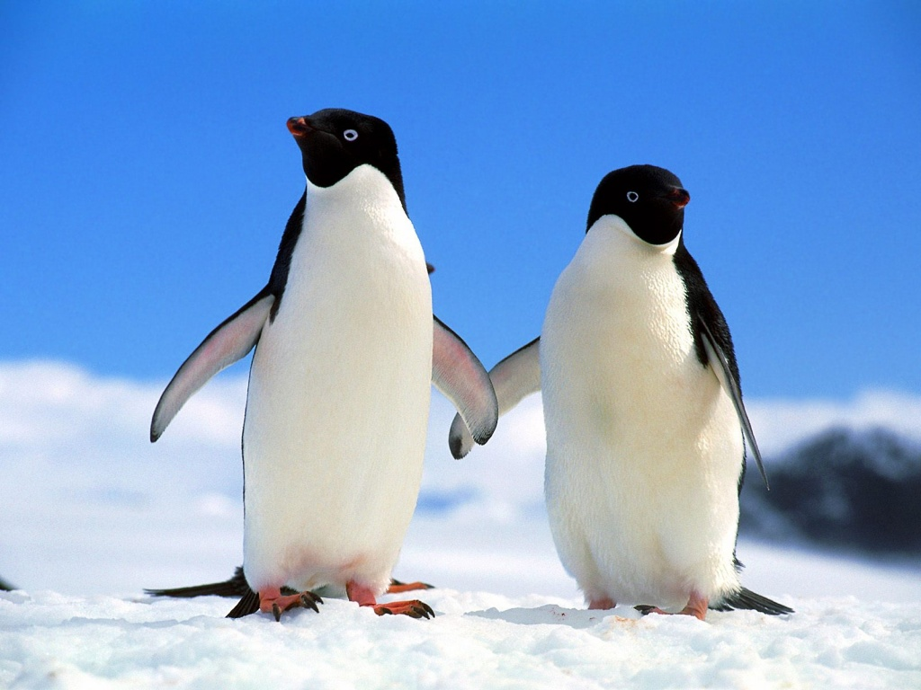 Pinguins da Bahia