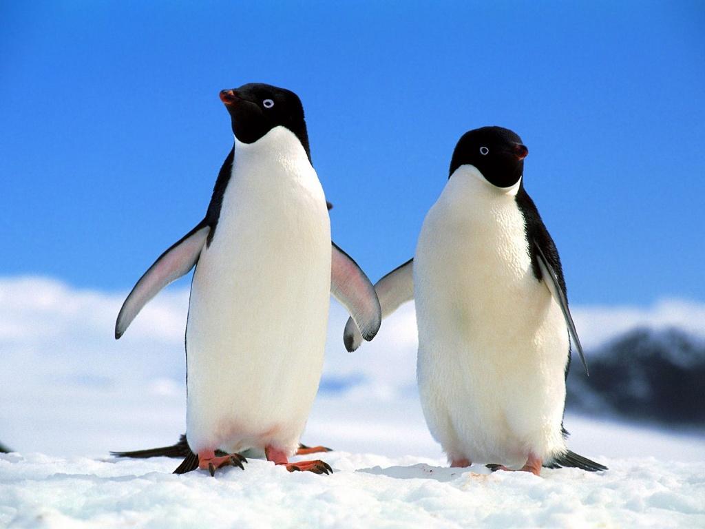 Pinguins da Bahia
