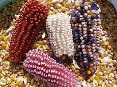 Sin maíz no hay país