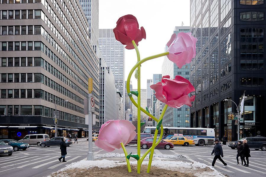 New York Roses Company