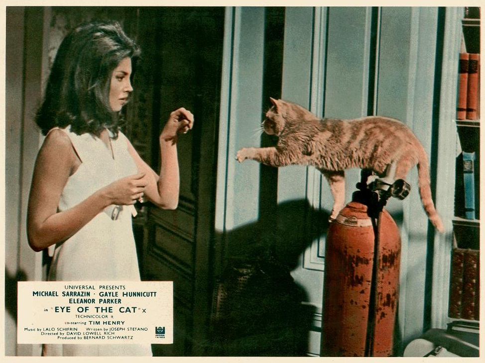 Image result for eye of the cat (1969)