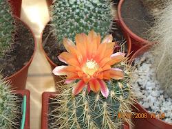 Maravillosa flor naranja
