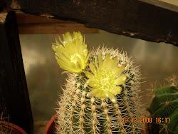 Flor de especie endémica