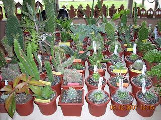 Vivero sanssouci productos del vivero sanssouci cactus y for Vivero de cactus