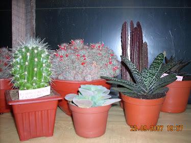 Diversos ejemplares de cactus y suculentas