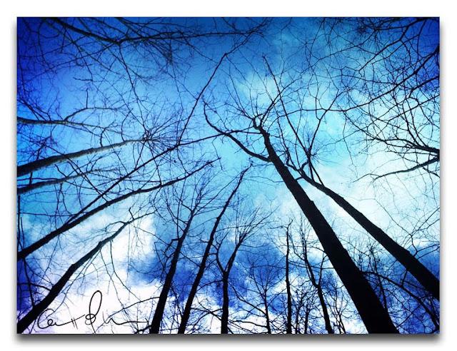 fotografía-artística-bosque-arboles